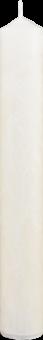 Palmová svíčka střední vysoká